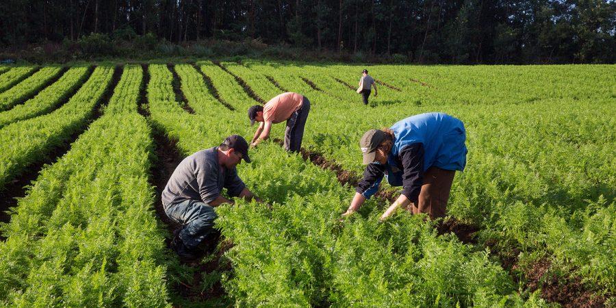 Estado terá linhas de crédito para produtos orgânicos em caso de calamidade